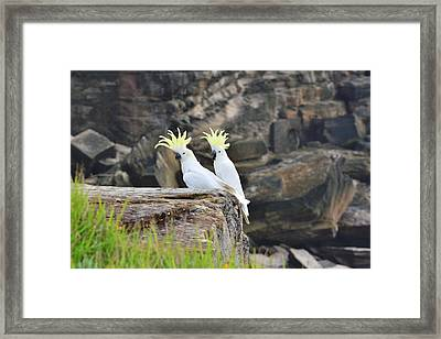 Cockatoos Framed Print by FL collection