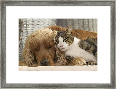 Cocker Spaniel And Cat Framed Print by Jean-Michel Labat