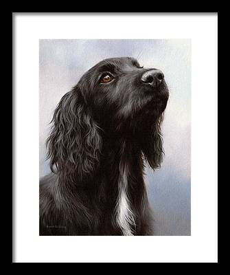 Cocker Spaniel Framed Prints