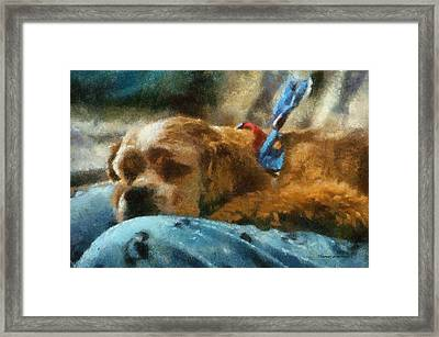 Cocker Spaniel Photo Art 07 Framed Print by Thomas Woolworth
