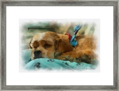 Cocker Spaniel Photo Art 06 Framed Print by Thomas Woolworth