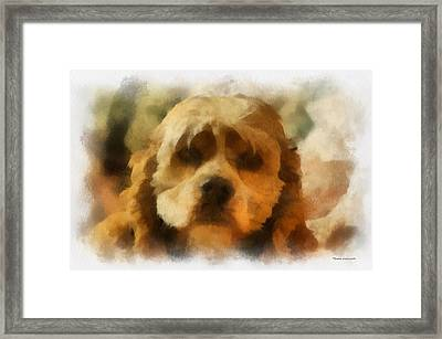 Cocker Spaniel Photo Art 03 Framed Print by Thomas Woolworth