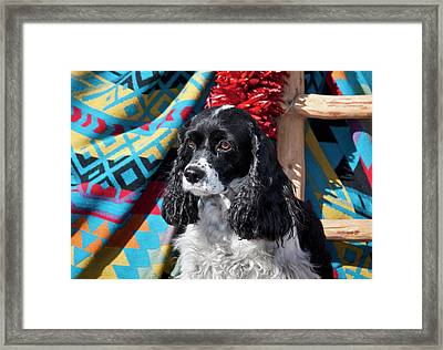 Cocker Spaniel Sitting Framed Print by Zandria Muench Beraldo