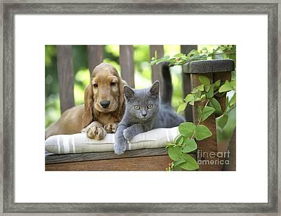 Cocker Spaniel With Kitten Framed Print by Jean-Michel Labat