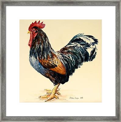 Cockerel Framed Print by Alison Cooper