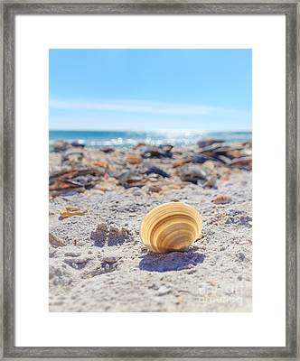 Cockle Shell Summer At Sanibel Framed Print by Peta Thames