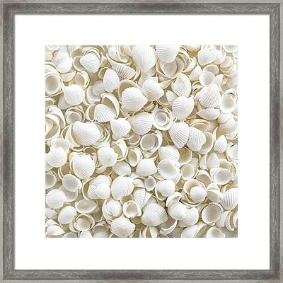 Cockle Shells Framed Print