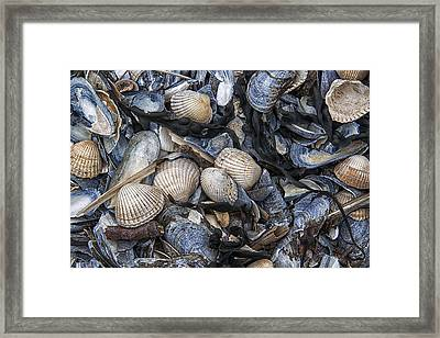 Cockles And Mussels Framed Print