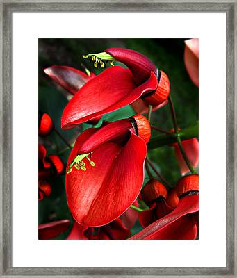 Framed Print featuring the photograph Cockspur Coral Tree by William Tanneberger