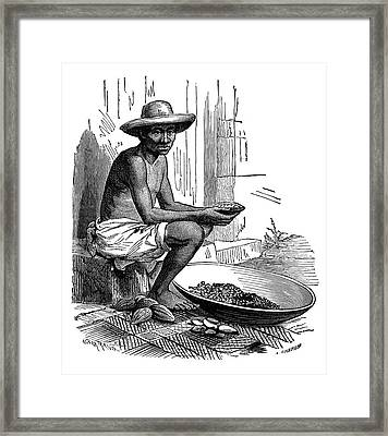 Cocoa Bean Processing Framed Print