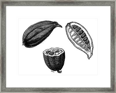 Cocoa Pods Framed Print by Science Photo Library