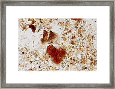 Cocoa Powder Drink (lm) Framed Print by Science Photo Library