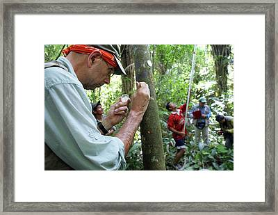 Cocoa Tree Pathogen Research Framed Print by Agricultural Research Service/us Department Of Agriculture