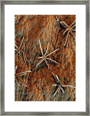 Cocoa Tree Trichomes Framed Print by Stefan Diller