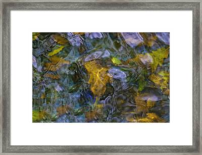 Framed Print featuring the photograph Cocoa's Doggie Pool  by Sherri Meyer