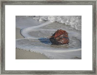 Coconut Bath Framed Print