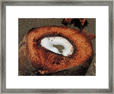 Coconut Framed Print by Gregory Young