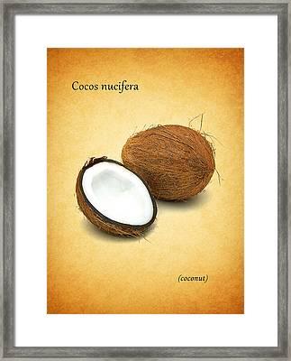Coconut Framed Print