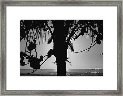 Coconut Palm - Cocotier - Ile De La Reunion - Reunion Island Framed Print by Francoise Leandre
