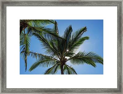 Coconut Palms Backlit By The Sunlight Framed Print by Robert L. Potts