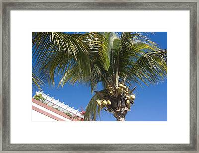 Coconut Tree Framed Print by Peter Lloyd