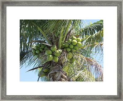 Coconut Framed Print by Zina Stromberg
