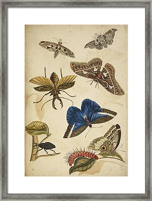 Cocoon Framed Print by British Library