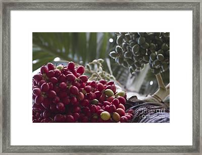 Cocos Nucifera - Niu Mikihilina - Palma - Niu - Arecaceae -  Palmae Framed Print by Sharon Mau