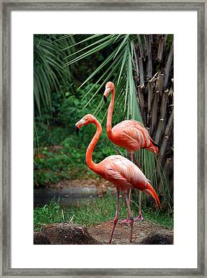 Code Pink Framed Print by Skip Willits