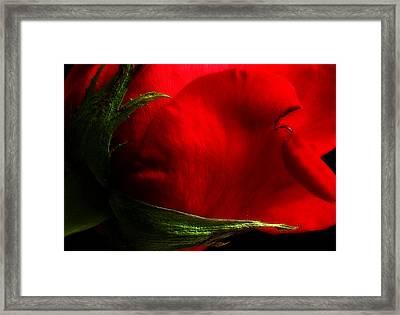 Scorn Framed Print