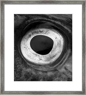 Cod's Eye Framed Print