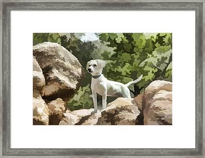 Cody On The Rocks Framed Print