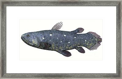 Coelacanth Fish Against White Framed Print by Corey Ford