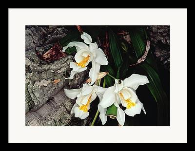 Epiphytic Framed Prints