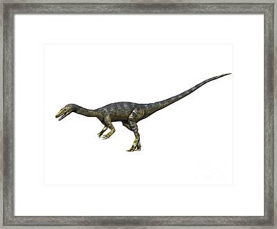 Coelophysis Dinosaur Framed Print by Nobumichi Tamura