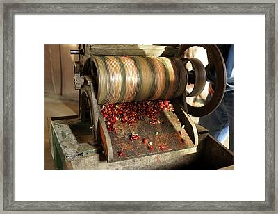 Coffee Beans, Costa Rica Framed Print by Panoramic Images
