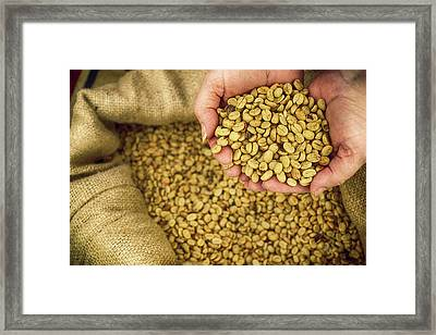 Coffee, Costa Rica Framed Print by Panoramic Images
