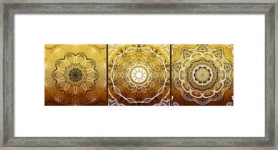 Coffee Flowers Medallion Calypso Triptych 1  Framed Print by Angelina Vick