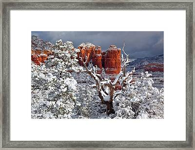 Coffee With Sugar Framed Print by Guy Schmickle