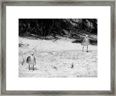 Framed Print featuring the photograph Cohorts by Tom DiFrancesca
