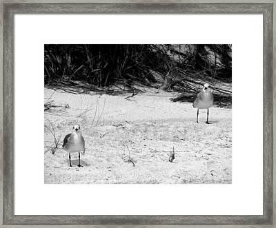 Cohorts Framed Print