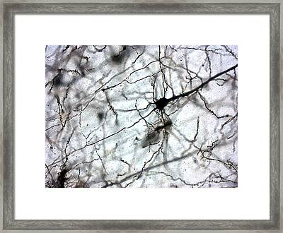 Colaterales Black And White Framed Print by Tyler Sloan