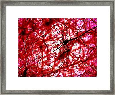 Colaterales Red Framed Print by Tyler Sloan