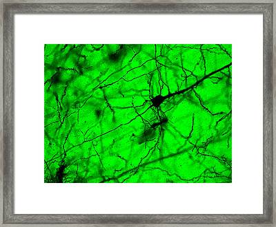Colaterales Framed Print by Tyler Sloan