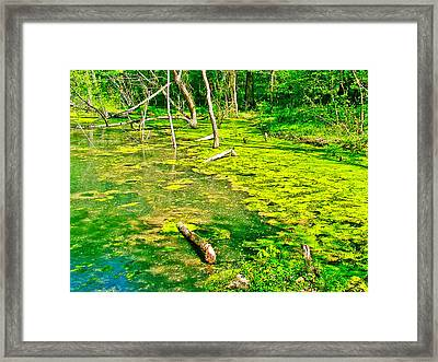 Colbert Creek Along Rock Spring Trail On Natchez Trace Parkway-alabama  Framed Print by Ruth Hager
