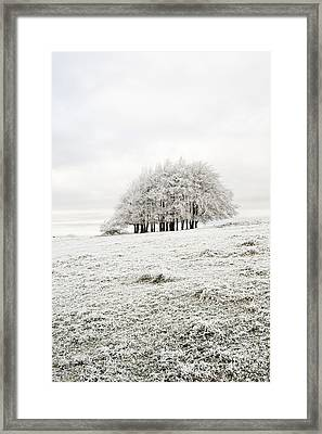 Cold Framed Print by Anne Gilbert