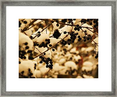 Cold Berries Framed Print by Christian Rooney