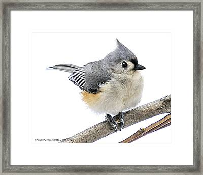 Cold But Tough Titmouse Framed Print