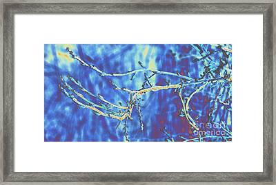Cold Framed Print by Carol Lynch