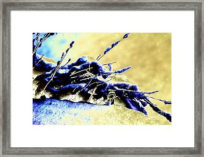 Cold Day Framed Print by Carol Lynch